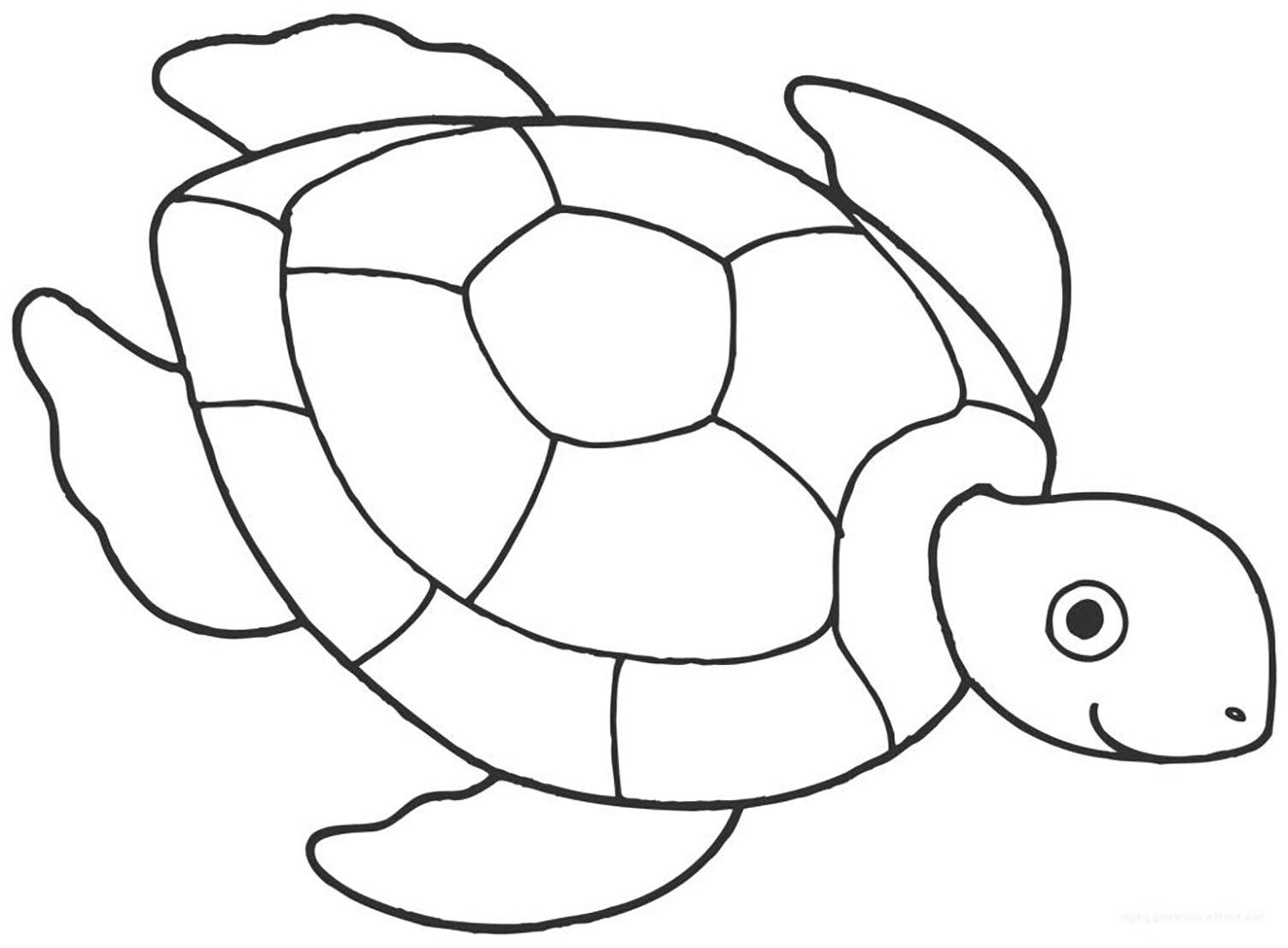 Coloriage de tortue simple pour enfants