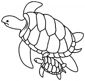 Coloriage de tortue à telecharger gratuitement