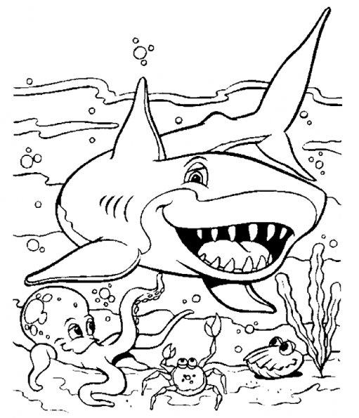 Coloriage de requin