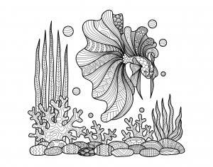 zentangle-a-colorier-poisson-sur-coraux-par-bimdeedee free to print